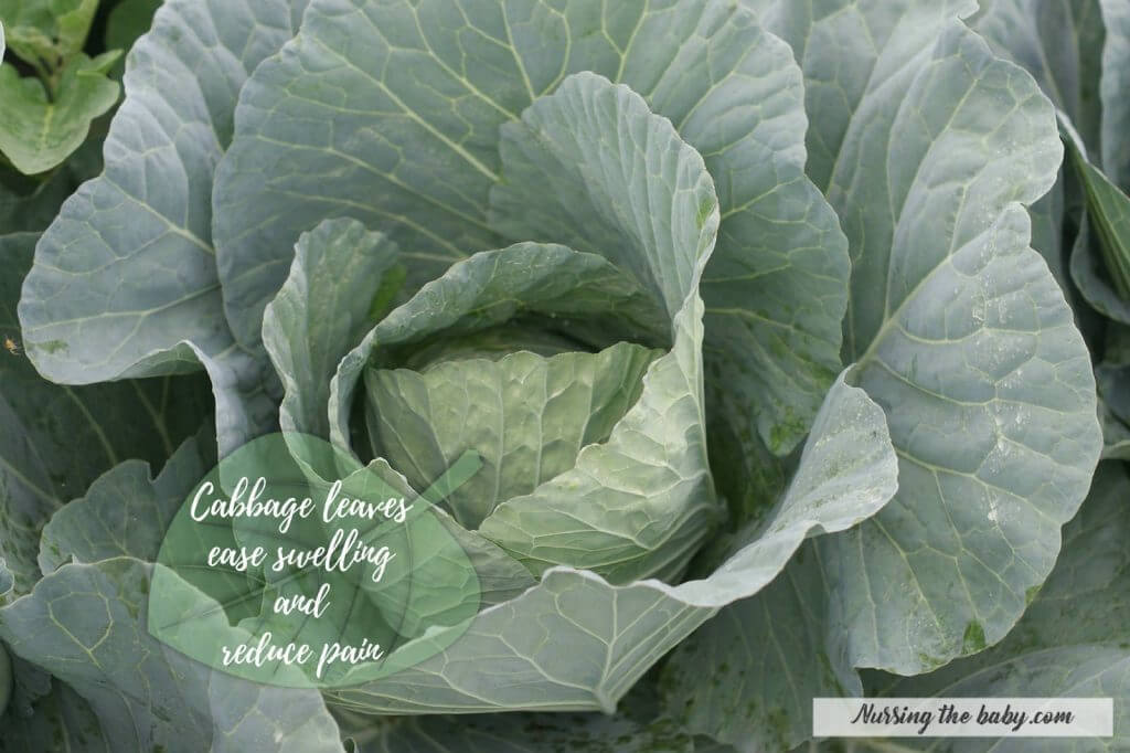 handling engorgement weaning breast pain nursing breastfeeding cabbage leaves